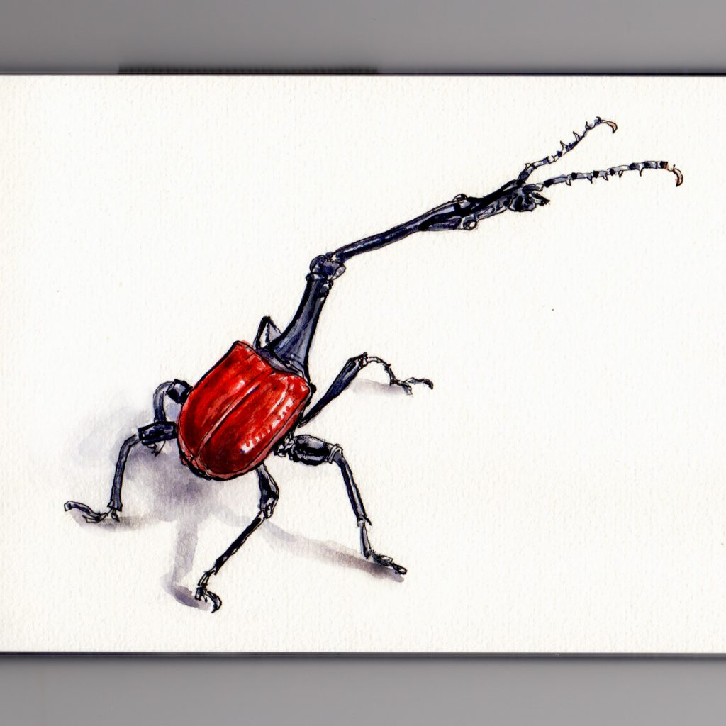 Meet the Amazing Giraffe Weevil doodlewash and watercolor sketch on white background