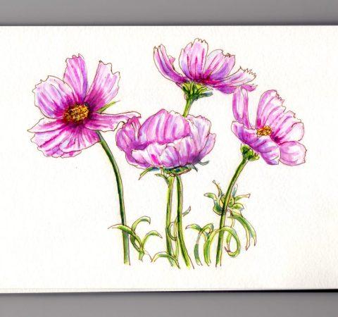 Pink Flowers Doodlewash and watercolor sketch