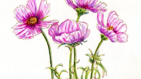 Pink Flowers Doodlewash and watercolor sketch