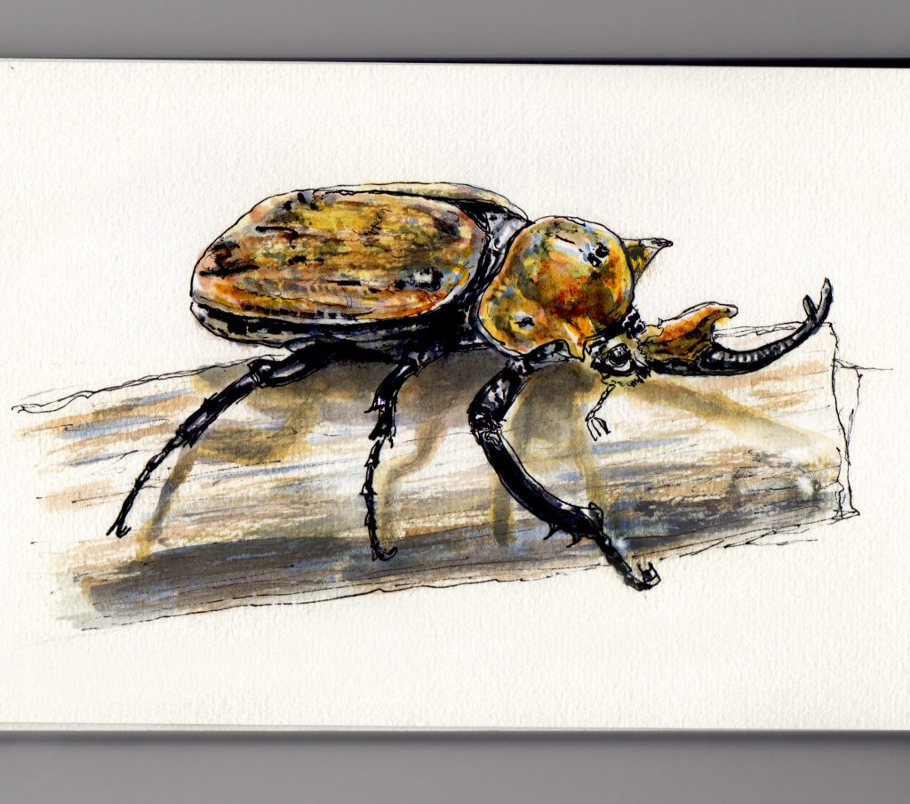 The mighty rhino Rhinoceros beetle doodlewash and watercolor sketch of strongest animal on the planet