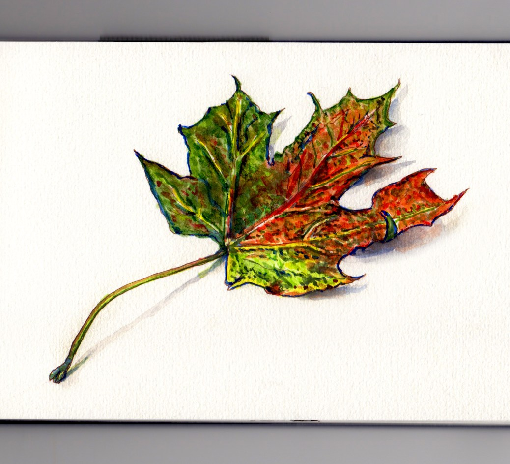 Autumn Leaf Doodlewash and watercolor sketch