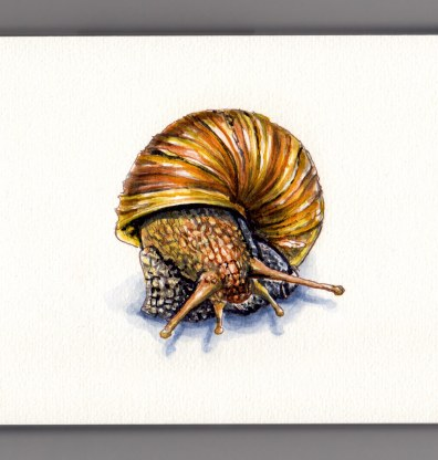 Doodlewash and watercolor sketch of snail and striped shell in gold brown orange with shadow on white background