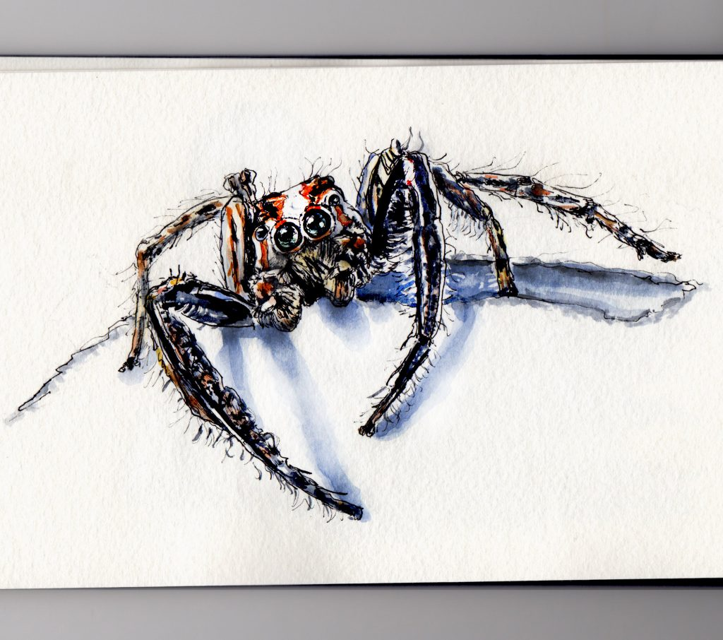 Look Out For Jumping Spiders Doodlewash and watercolor sketch of spider crawling out of sketchbook