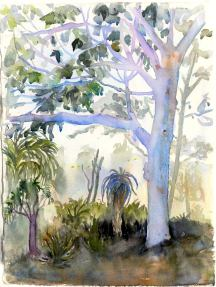 Doodlewash and watercolor sketchy by Asuka Kagawa of Brisbane Botanic Gardens Mt Coot-tha