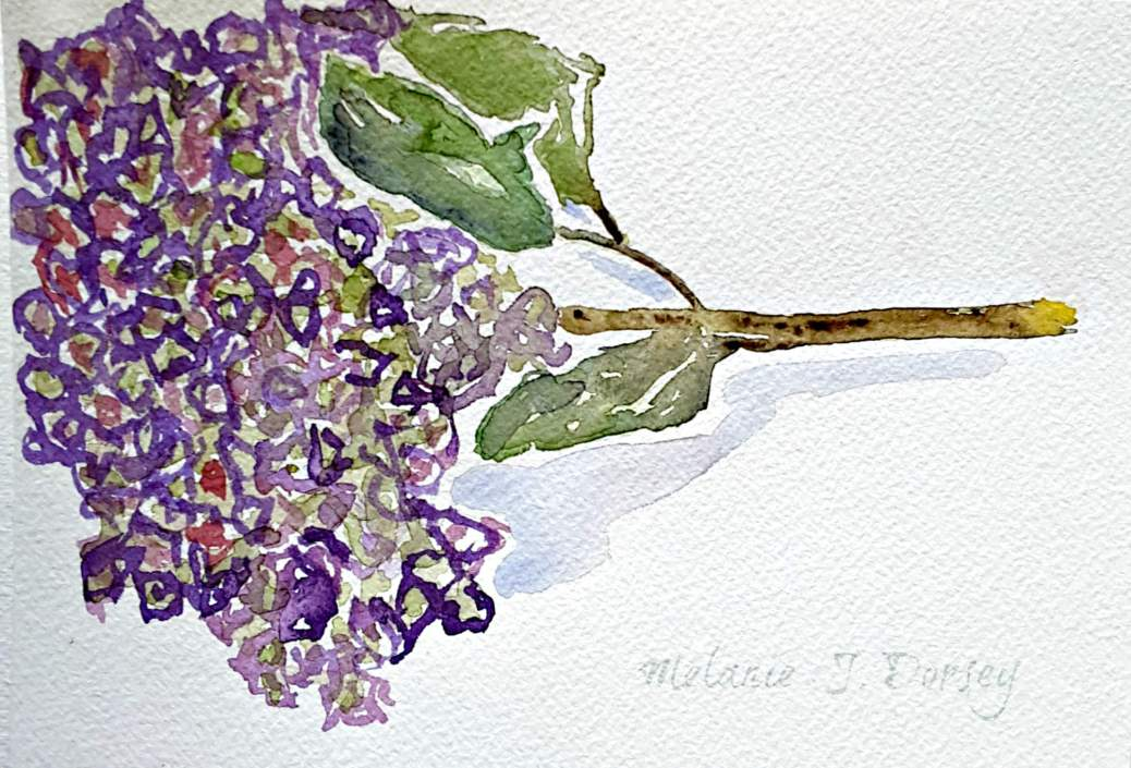 Doodlewash and watercolor sketch by Melanie J. Dorsey of dried hydrangea