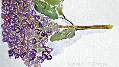 Doodlewash and watercolor sketch by Melanie J. Dorsey of dried hydrangea