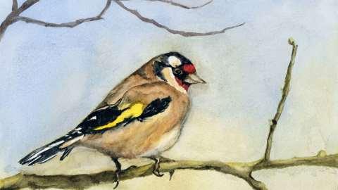 Doodlewash and watercolor sketch by Meliessa Garrison Elliott of Carduelis Bird