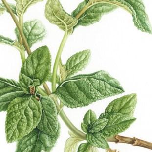 Doodlewash - Botanical Illustration by Işık Güner 5