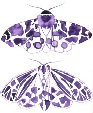 Doodlewash - Watercolor Illustration - Fashion - by James Skarbeck of butterflies / moths
