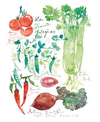 #Doodlewash - Watercolor illustration by Lucile Prache (Lucile's Kitchen) of Les plantes potagères - Vegetables #WorldWatercolorGroup