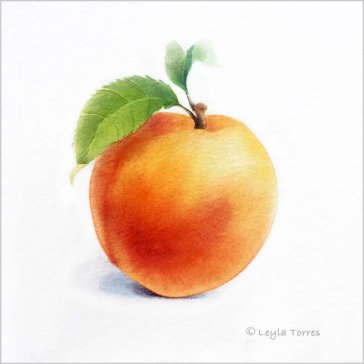 #Doodlewash - Watercolor Illustration by Leyla Torres of peach - #WorldWatercolorGroup