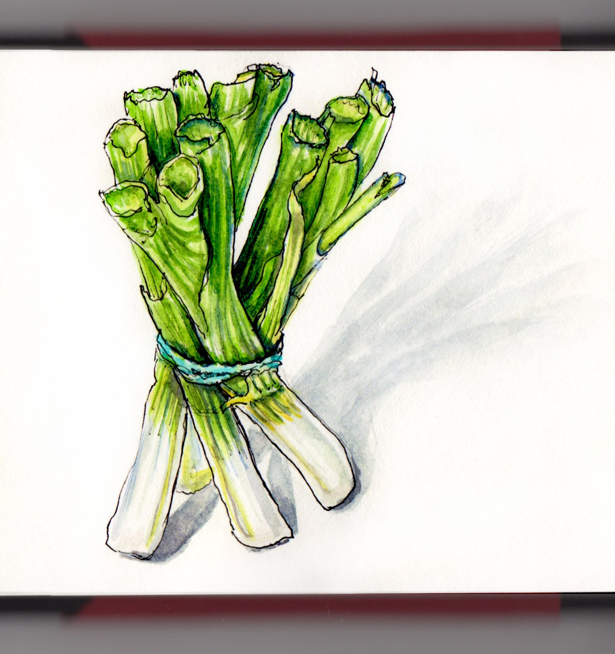 Day 29 - #WorldWatercolorGroup Leeks in a bundle on white background watercolor