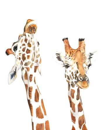 #WorldWatercolorGroup - Watercolor painting of giraffes by Louise De Masi - #doodlewash