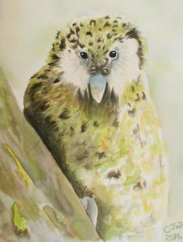 #WorldWatercolorGroup - Watercolor by Chloe Jayne Waterfield - kakapo - #doodlewash