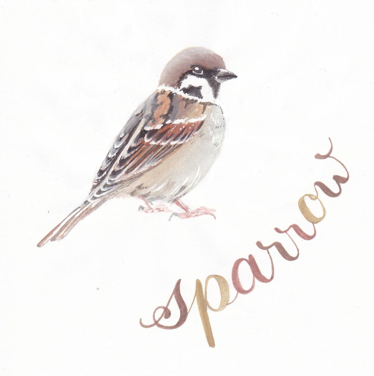 6-sparrow