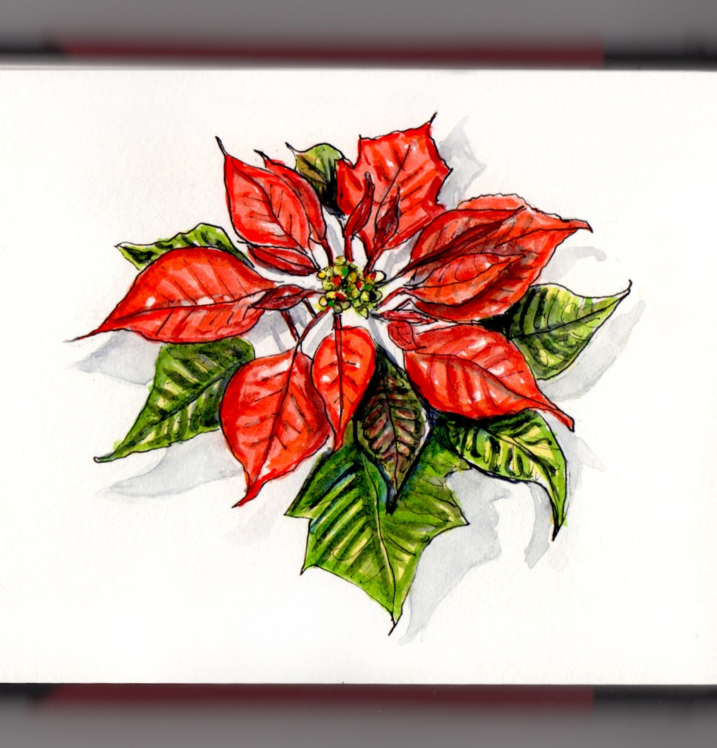 Day 11 - #WorldWatercolorGroup Poinsettia Day is December 12 Christmas Flower