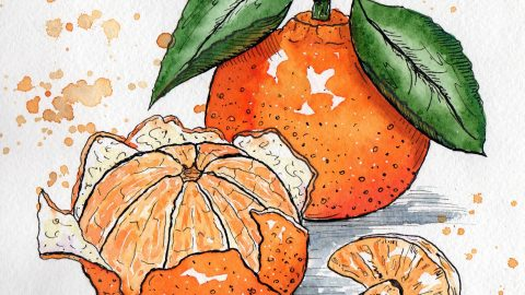#WorldWatercolorGroup - Watercolor painting by Juliana Danilina in Odessa, Ukraine of oranges - #doodlewash