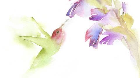 #WorldWatercolorGroup - Watercolor painting by Angela Casey of Hummingbird - #doodlewash