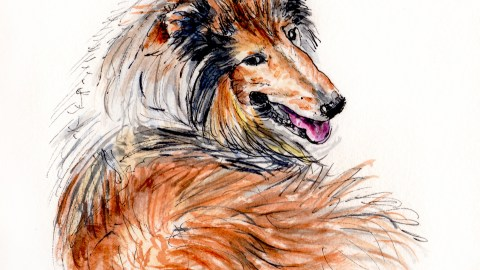Day 13 - #WorldWatercolorGroup Pet Rough Border Collie named Lucky
