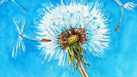 Day 16 - #WorldWatercolorGroup Making WIshes Blowing Dandelions Love - #doodlewash