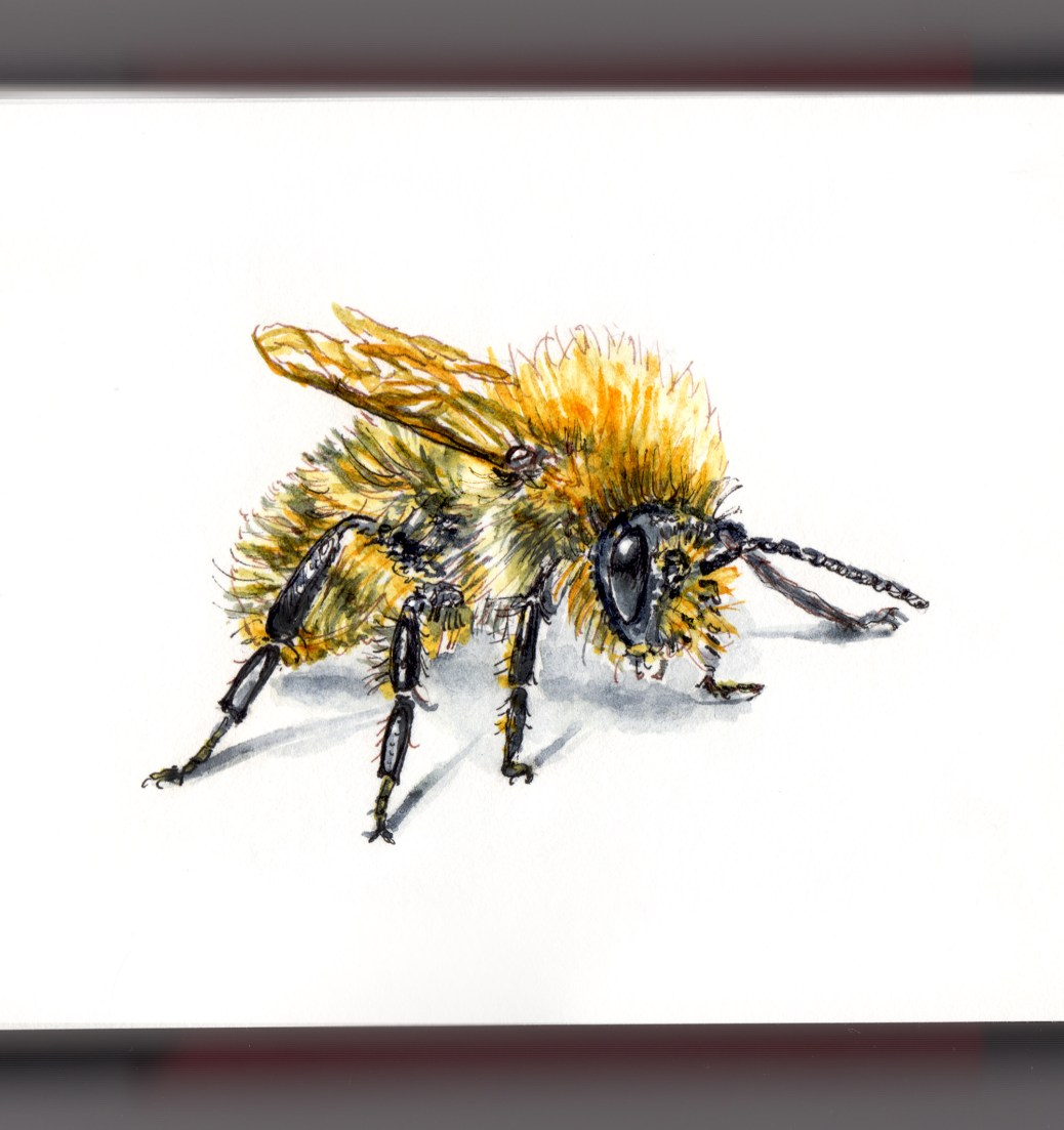 DoodlewashR Flight Of The Bumblebee