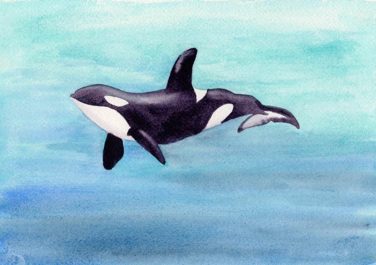 #WorldWatercolorGroup - Watercolor sketch by Andrea England - #doodlewash