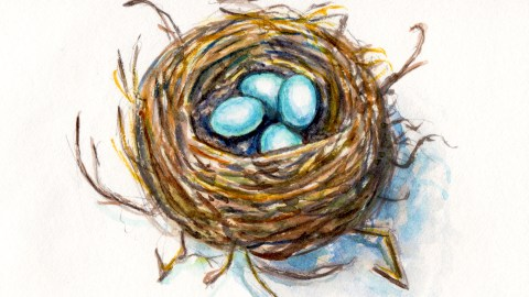 Day 19 - #WorldWatercolorGroup Robin Blue Eggs In Nest - #doodlewash