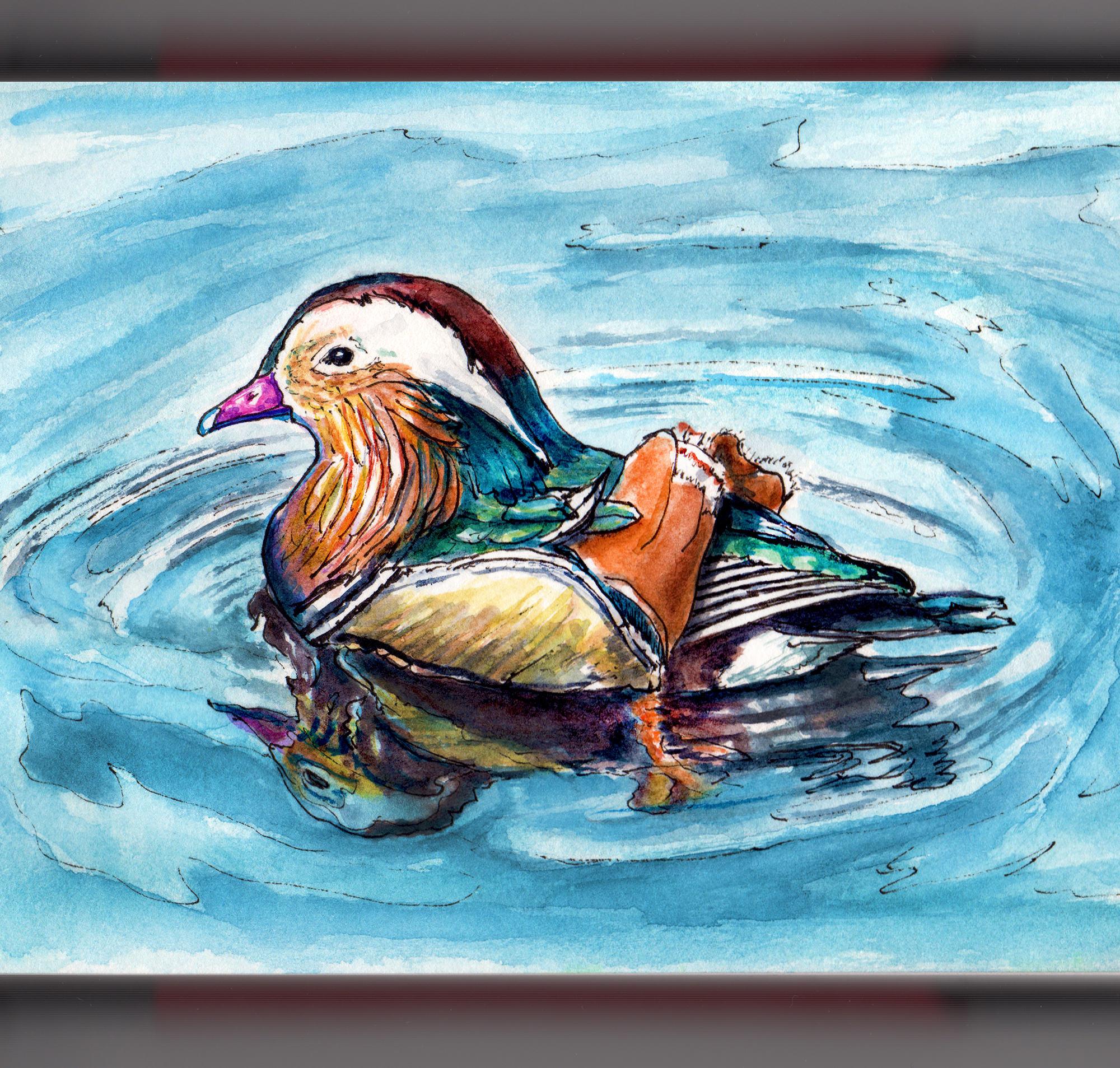 Day 22 - #WorldWatercolorGroup Mandarin Duck In water learning to swim watercolor - #doodlewash