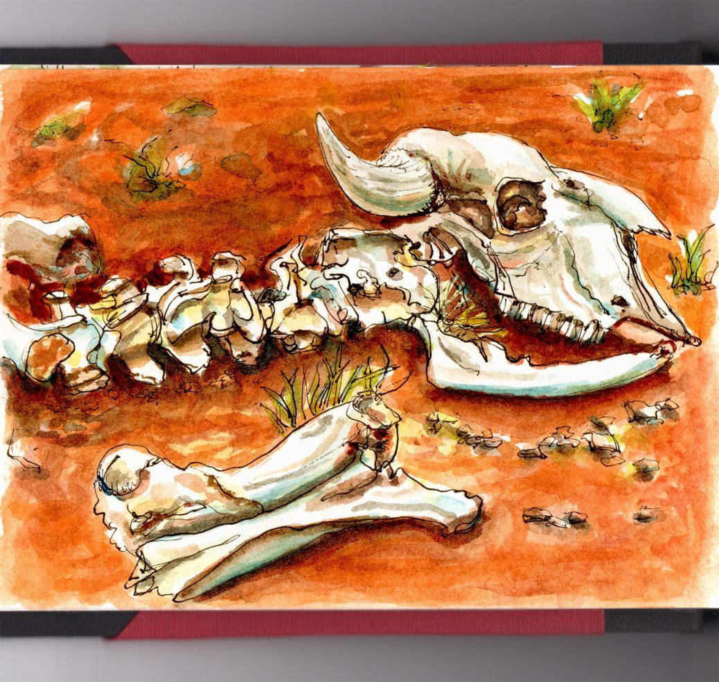 Day 7 - Animal Bones on Red Orange Dirt
