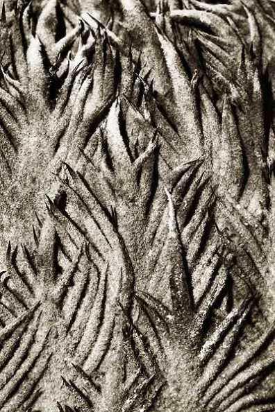 Patterned Palm