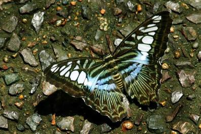 Butterfly & Stones