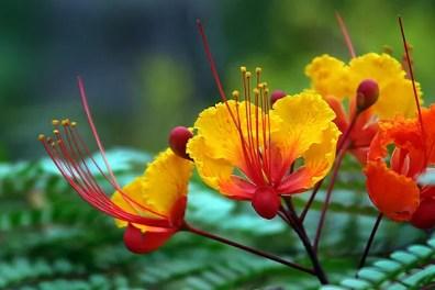 Burning Blossom