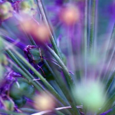 Natural Kaleidoscope