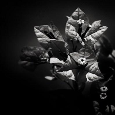 Flower Noir