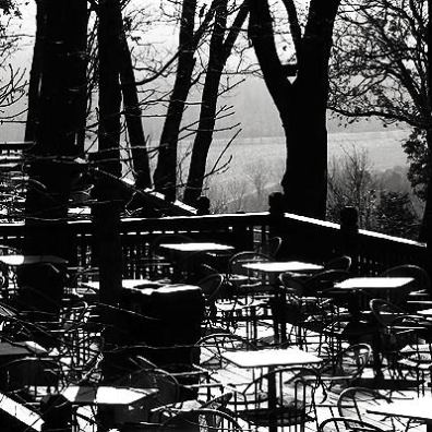 Forest Dining
