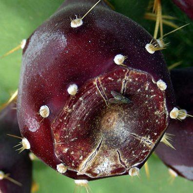 Odd Fruit