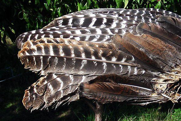 Random Feathers
