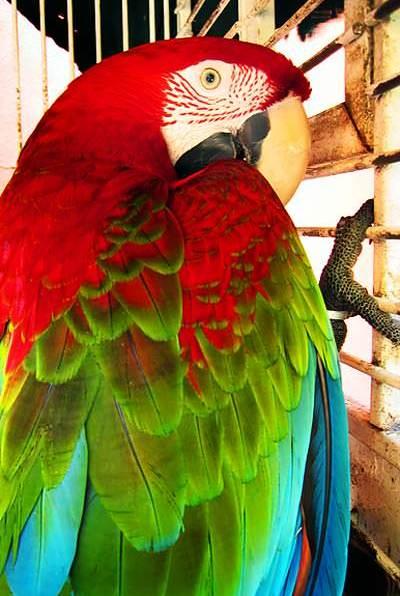 Paranoid Polly