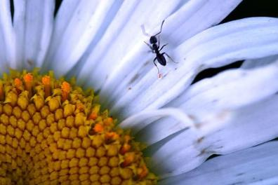 Busy Ant