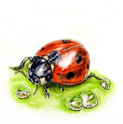 Day 14 - #WorldWatercolorGroup - Do Ladybugs Drink Water Ladybug on leaf with water drops - #doodlewash