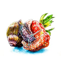 Day 27 - #WorldWatercolorGroup - A Snail And A Strawberry Watercolor - #doodlewash