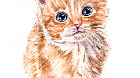 Day 9 - #WorldWatercolorGroup - Cute Kitten Golden With Big Blue Eyes - #doodlewash