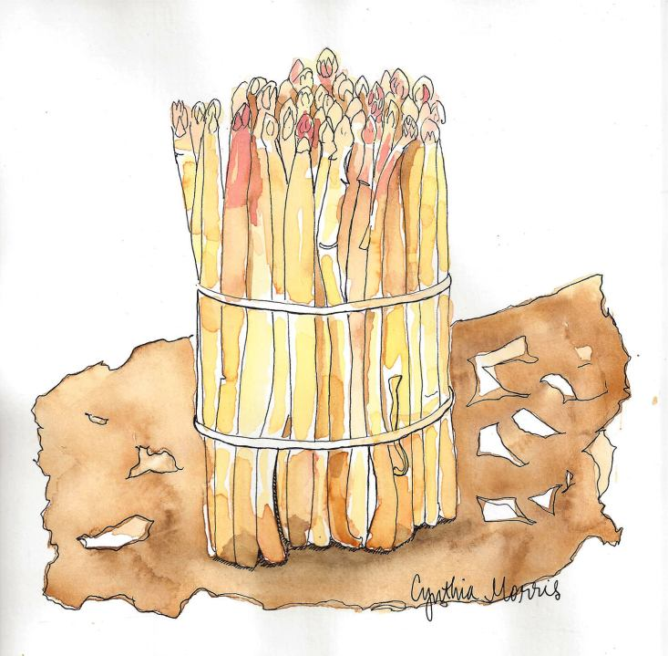 #WorldWatercolorGroup - Watercolor by Cynthia Morris - white asparagus - Asperges Blanches - #doodlewash
