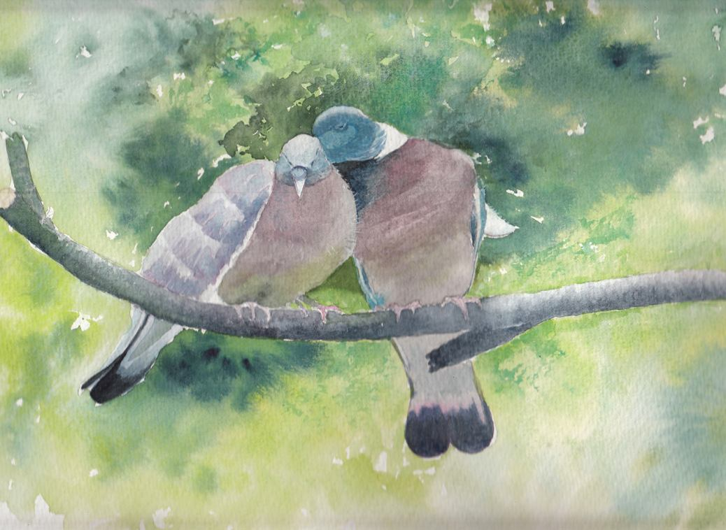#WorldWatercolorGroup - Watercolor by Jan Purves - Bill and Coo - #doodlewash