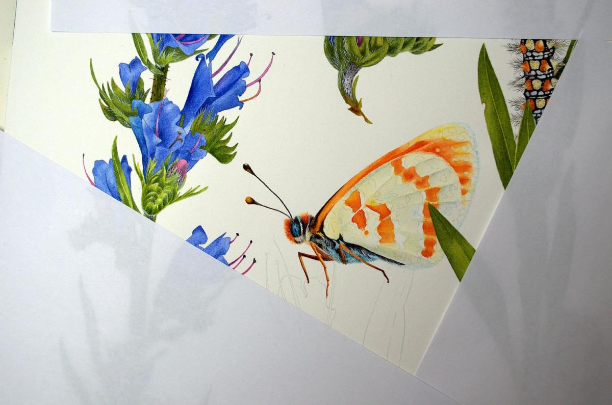 #WorldWatercolorGroup - Watercolor by Krzysztof Kowalski - Melitaea Didyma 03 - #doodlewash