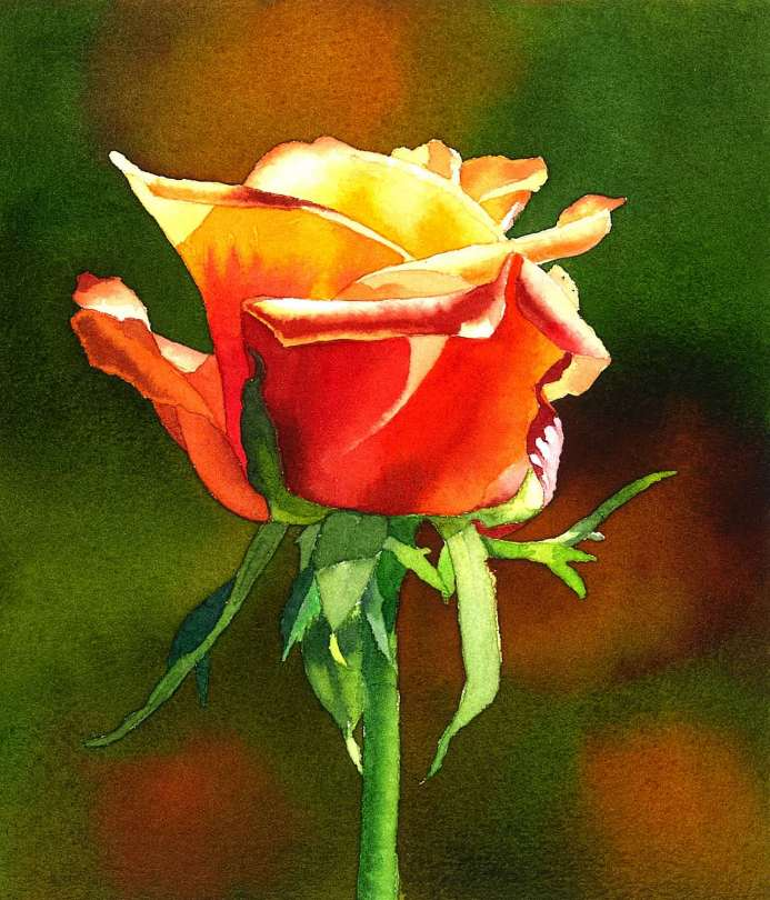#WorldWatercolorGroup - Watercolor by Krzysztof Kowalski - Rose - #doodlewash