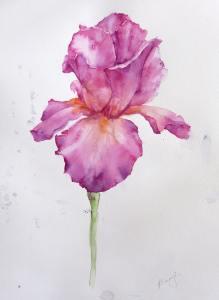 Pink-iris2