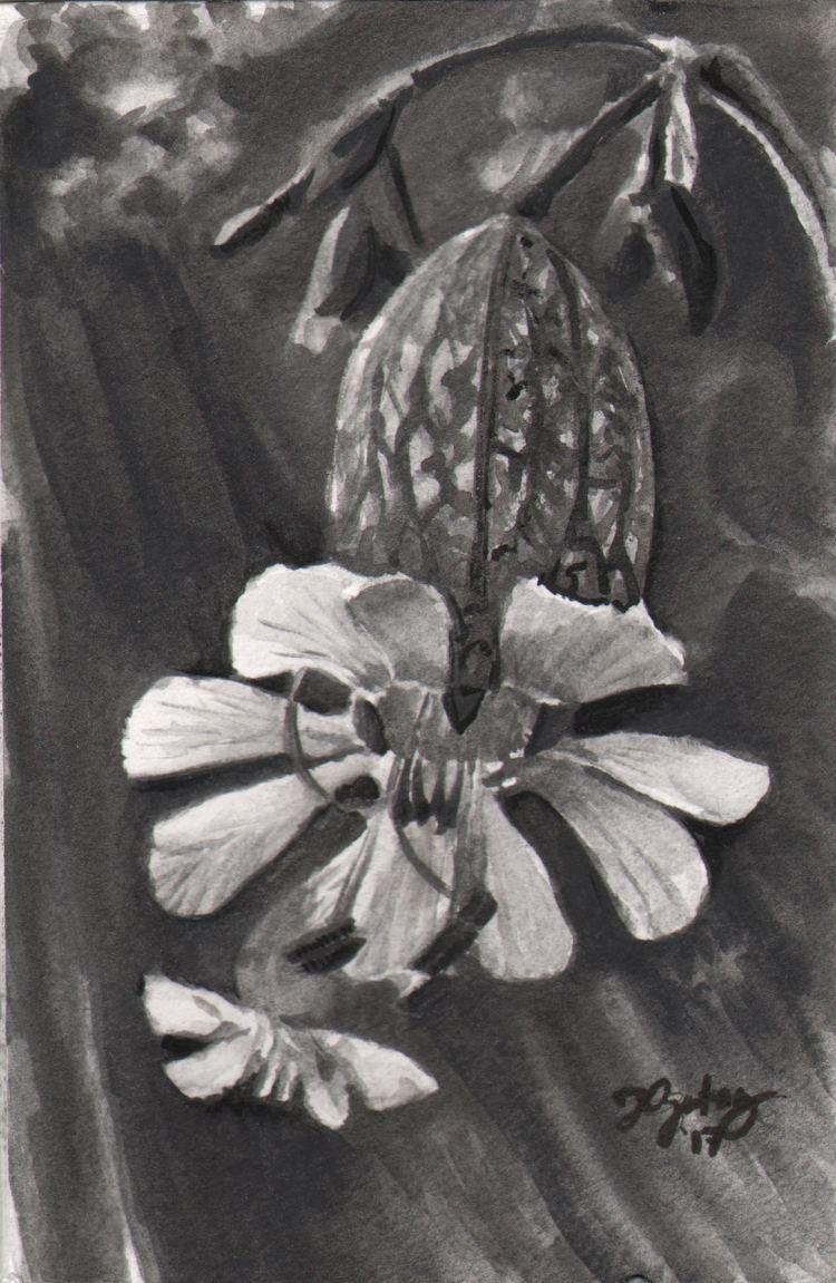 Tonal Study, Lake Flower (Watersoluble Graphite) Tonal_LakeFlower_WCGraphite
