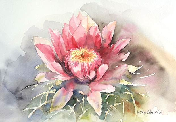 #WorldWatercolorGroup - Watercolor by Violeta Boyadzhieva - cactus flower - #doodlewash