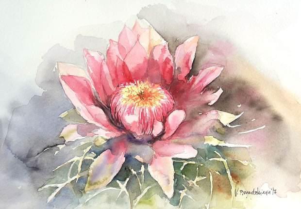 #WorldWatercolorGroup - Watercolor by Violeta Boyadzhieva - cactus flower - #doodlewash